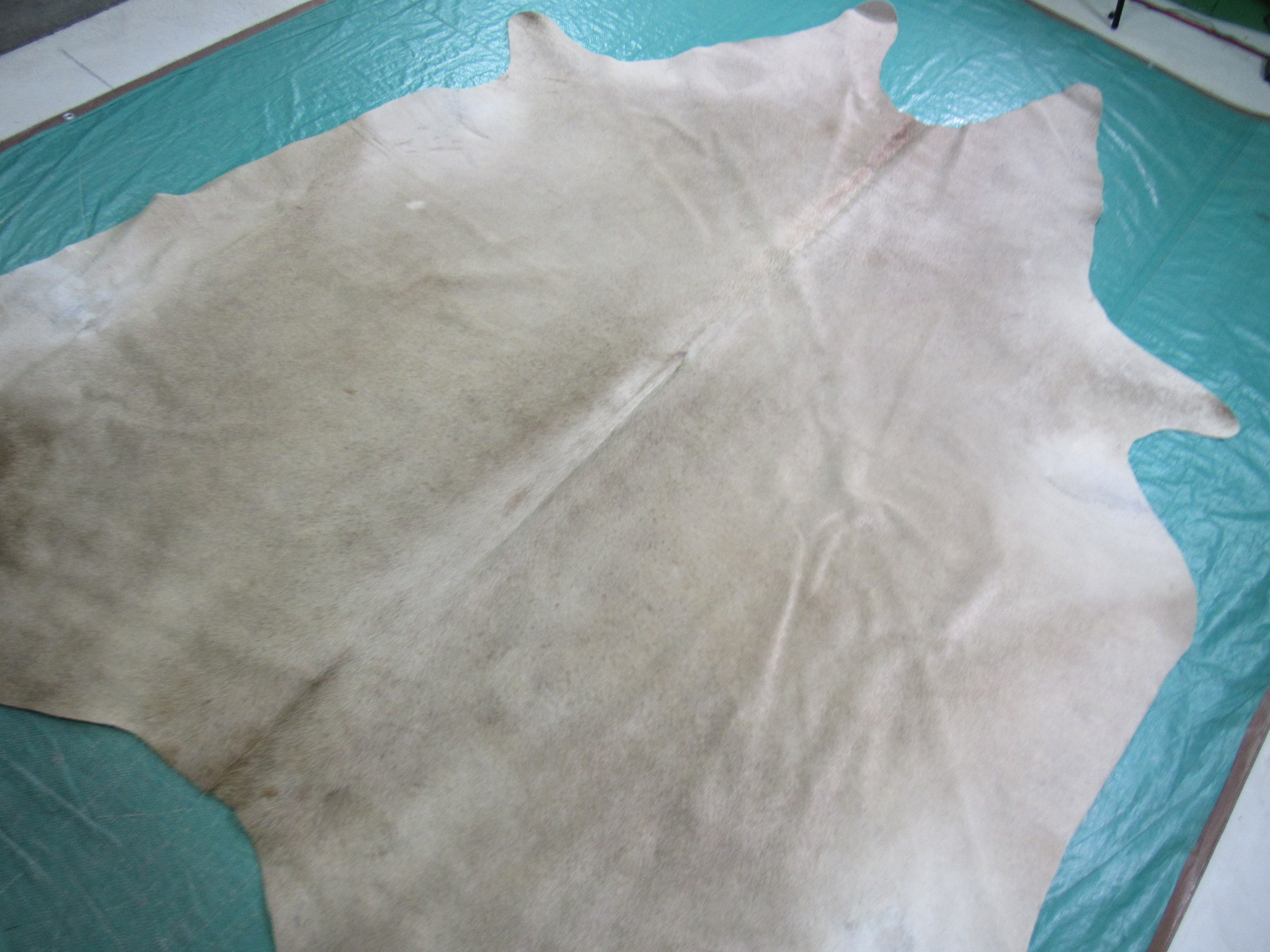 A-1209 Champagne Cowhide Rug Size: 8' X 6 1/2'