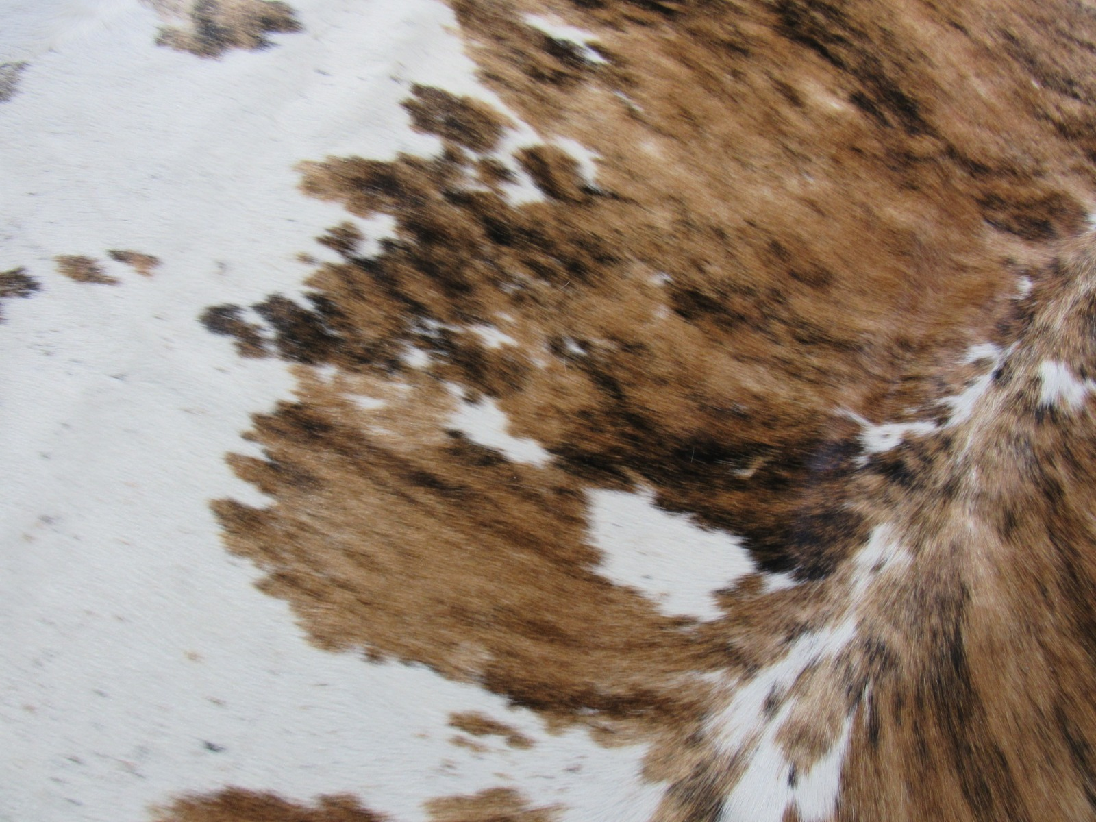 A-1271 Tricolor Speckled Cowhide Rug Size: 7 1/4' X 7 1/4'