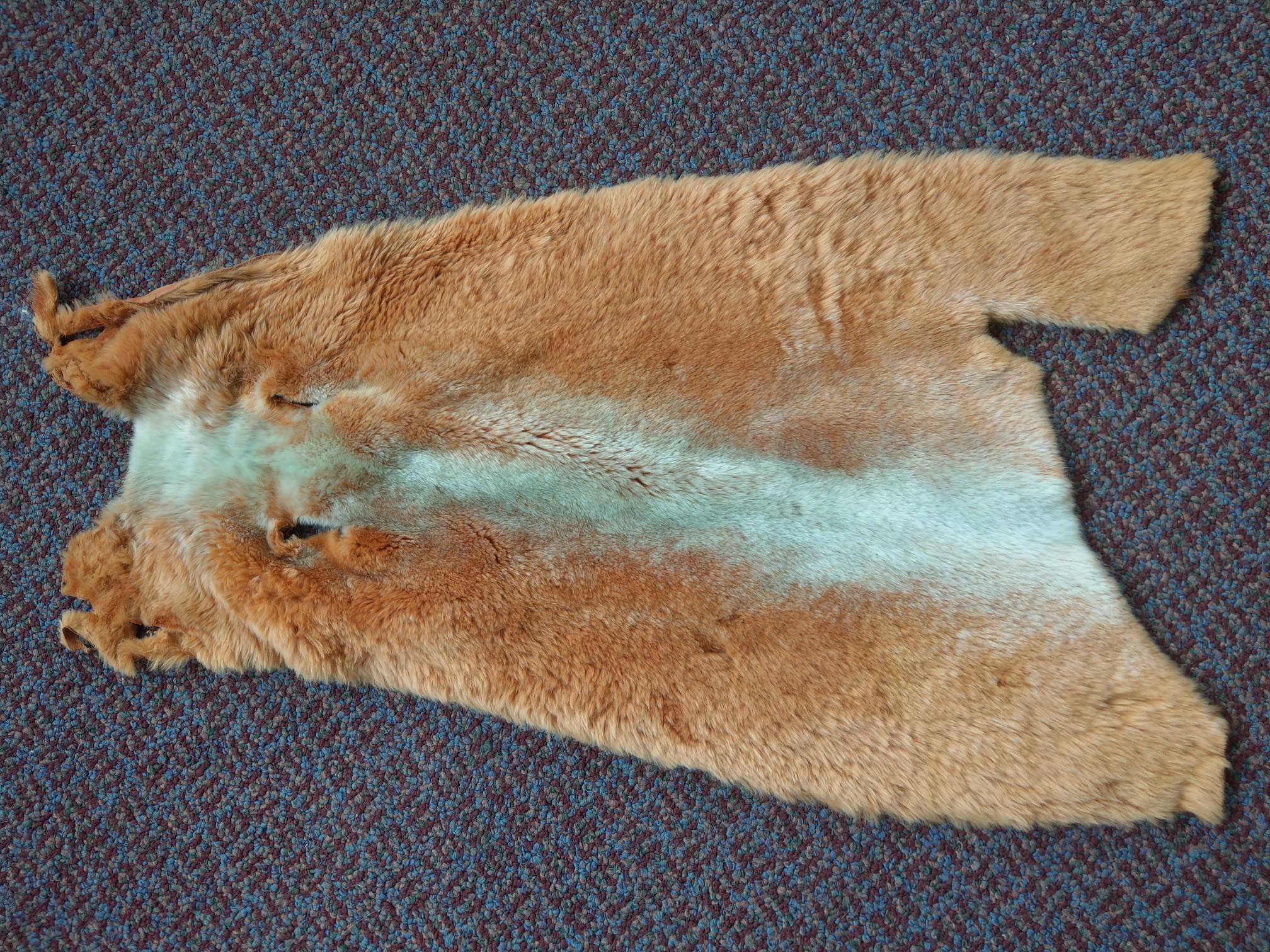 "Dyed Nutria Pelt Soft Tanned Nutria Pelt Skin Size: 20"" X 10"""